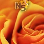 Logo on Orange Rose